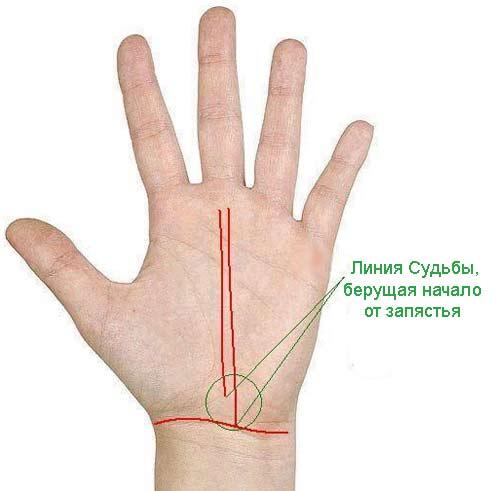 palm-signs9.jpg