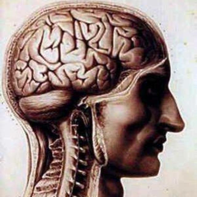 Самые распространенные заблуждения о психологии