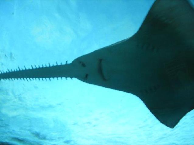фото виды акул
