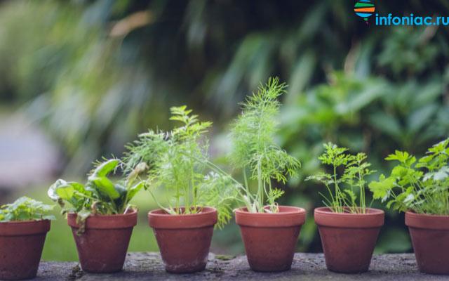 plants0721-12.jpg