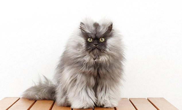 Самый известный кот из интернета