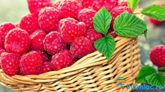 Кустарник с красными ягодами: названия и фото растений с кислыми и горькими, мелкими и крупными