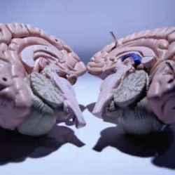 Повреждение коры головного мозга последствия