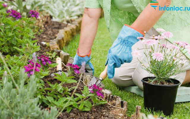 plants0621-6.jpg