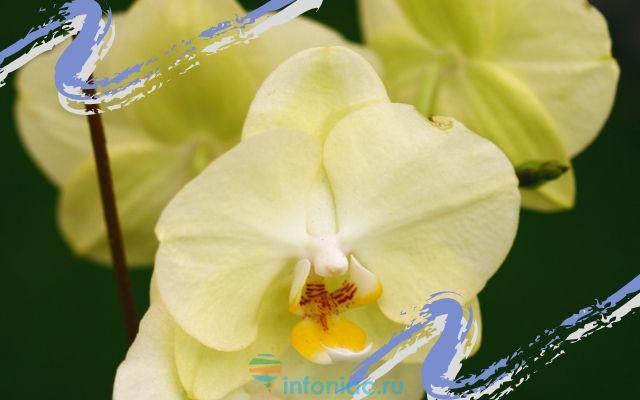 orhidea6.jpg