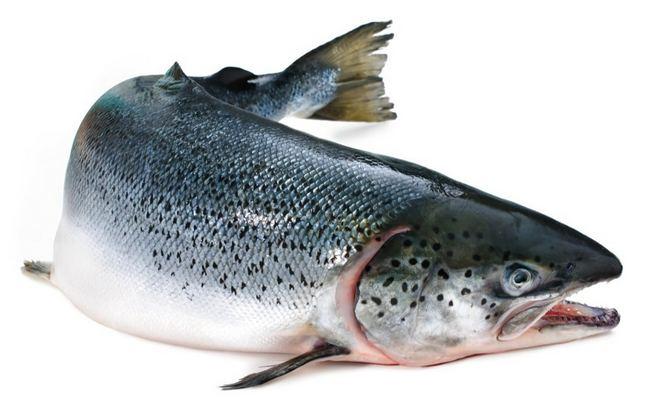 Какая морская рыба самая полезная для здоровья