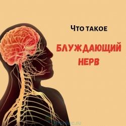 Блуждающий нерв: почему он важен и как его стимулировать, чтобы сохранить психику в порядке