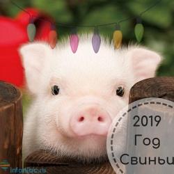 Год Желтой Земляной Свиньи: точный прогноз по году рождения на 2019 год