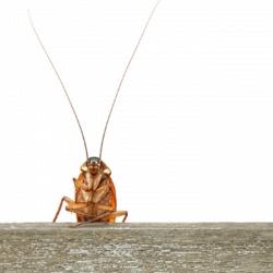 К чему снится таракан – узнайте значение сна