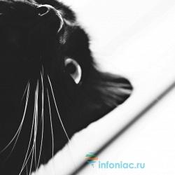 Правда ли, что у кошек 9 жизней?