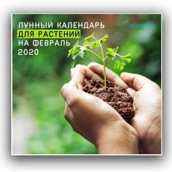 Лунный календарь для растений по дням на февраль 2020