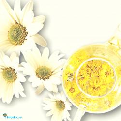 Ромашковый чай при простуде взрослому – как пить при температуре