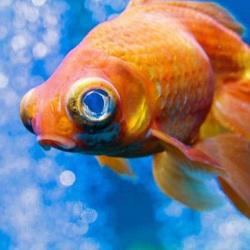 К чему снится рыба – толкование сна