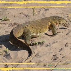 10 самых интересных животных пустыни Сахара