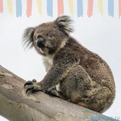 20 удивительных фактов об Австралии