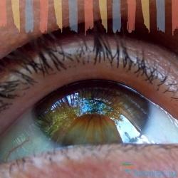 50 занимательных фактов о глазах