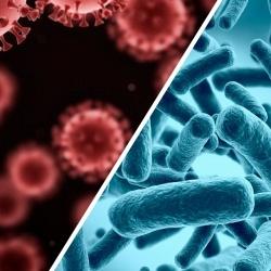 В чем различие между вирусом и бактерией: объясняем простыми словами