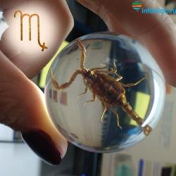 Все о Скорпионе: интересные факты и особенности знака зодиака