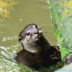 Крупные млекопитающие пресных вод