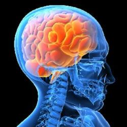 Мозг регулирует уровень сахара в крови