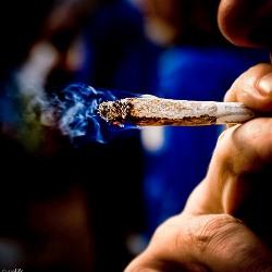 Лучше изредка курить марихуану, чем постоянно курить табак
