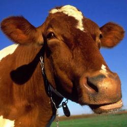 Пять причин, по которым не стоит пить молоко