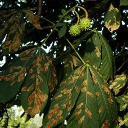 Первый вирус, поражающий и растений, и людей