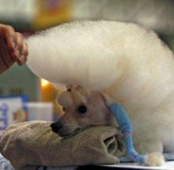 Первый в мире семизвездочный отель для домашних животных