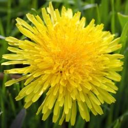 10 цветов, которые можно есть