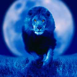 знакомство в луне во льве