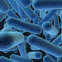 Люди различаются по типу бактерий