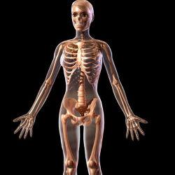 Как правильно заботиться о своих костях на протяжении всей жизни