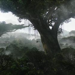 10 самых фантастических деревьев мира
