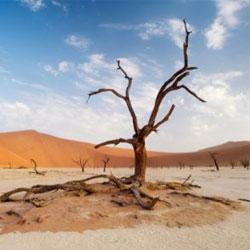 Самые засушливые места на планете