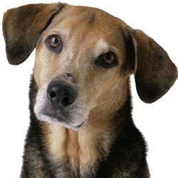 Какую пользу приносят собаки нашему здоровью?
