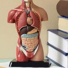 25 фактов, которые мы бы не хотели знать о нашем теле