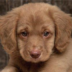 10 вещей, которых вы не знали о собаках