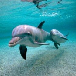 Целительная сила дельфинов помогает людям