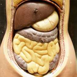 Как помочь кишечнику быть здоровым?