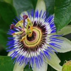10 самых редких цветов