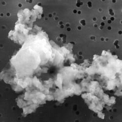 Пыль в нашем доме – это мертвая кожа?