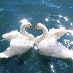 Дикая сторона любви