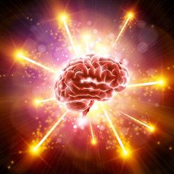 Мозг надежно защищает обонятельную функцию