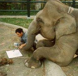 Слон научился говорить на корейском языке