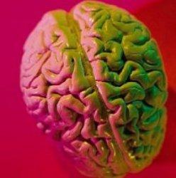 10 вещей, которых вы не знали о своем мозге