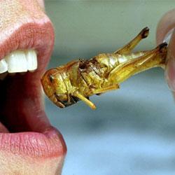 Еда будущего: мы будем питаться насекомыми?