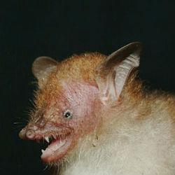 11 удивительных видов, открытых в 2011 году