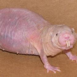 Самые ужасно выглядящие животные