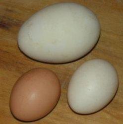 Распространенные мифы о яйцах