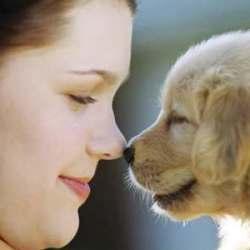 Любишь девушку – люби и ее собаку